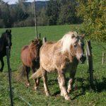 Pferde in Mooseurach