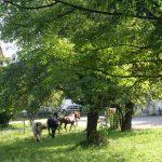 Pferde laufen in den Stall